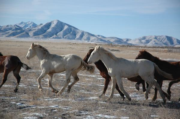 William Perry Pendley, acting director of the Bureau of Land Management, says wild horses and burros are the biggest threat to public lands in the West.