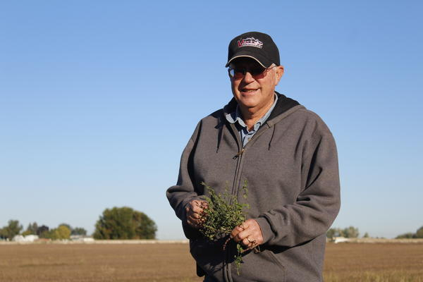 Recently-retired farmer Drew Eggers holds a bunch of mint that was growing at the edge of a harvested field.