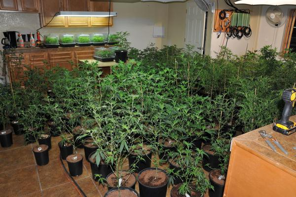 An illegal grow documented by the Douglas County Sheriff's Office in 2018.