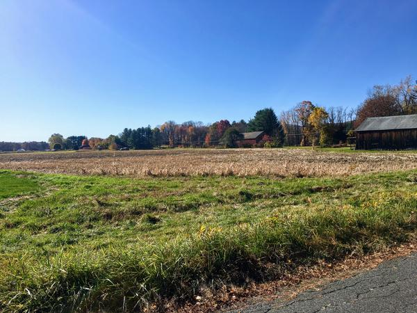 A cornfield adjacent to a pasture and farm in South Deerfield, Massachusetts.