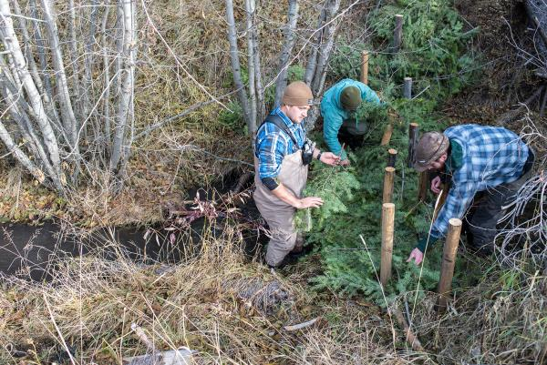 Resource conservation student Jared Smith (left) builds a beaver dam analog on Fish Creek in western Montana, along with another undergraduate and Ph.D. ecology student Andrew Lahr (right), Oct. 19, 2019.