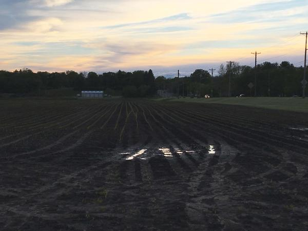 This wet field in Story County, Iowa got planted, but persistent rains or flooding prevented many farmers from getting some crops in the ground.