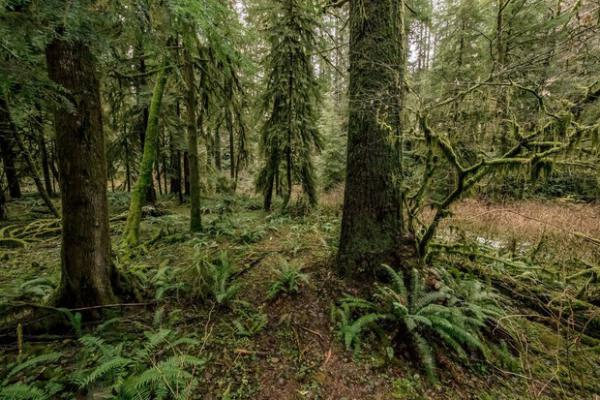 <p>The Elliott State Forest near Coos Bay, Oregon, is on track to be removed from its ties to the Common School Fund.</p>