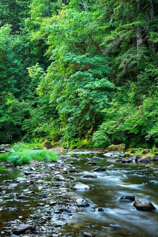 <p>The West Fork Milicoma River is part of the tract of land within the Elliott State Forest that was sold to a private timber company in 2014.</p>