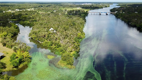 Blue-green algae in the Caloosahatchee River at the beginning of Summer, 2018.