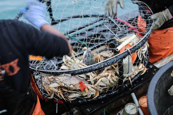 <p>A crab pot with caught Dungeness crab inside, off the port of Port Orford.&nbsp;</p>