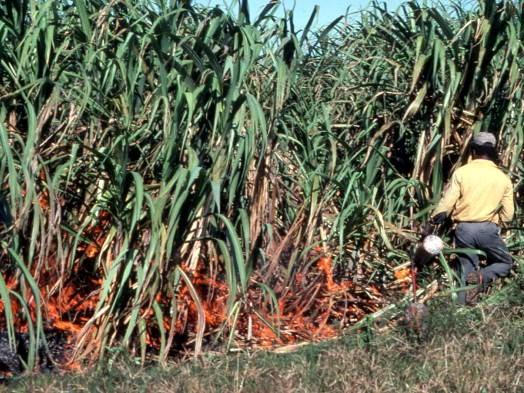 Sugar cane workers set fire to fields in order to harvest crops, like this image from 1985 in Clewiston.