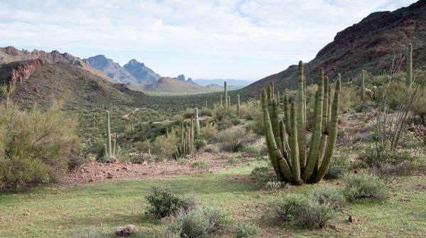 Organ Pipe Cactus National Monument, an International Biosphere Reserve along the U.S.-Mexico border, where some park rangers from around the West have been deployed to boost law enforcement.