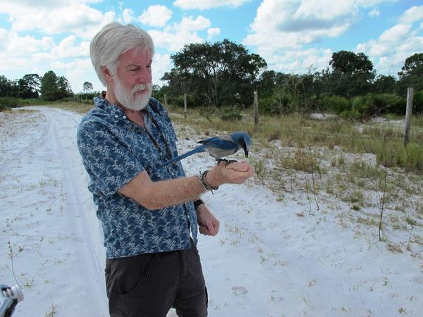 Reed Bowman and an endangered scrub jay at Archbold Biological Station