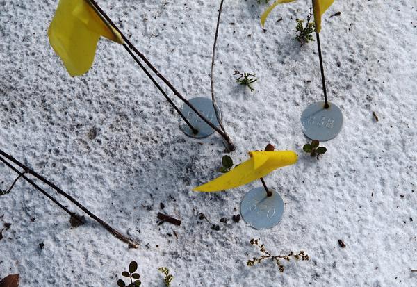 Rare plants marked for observation at Archbold Biological Station
