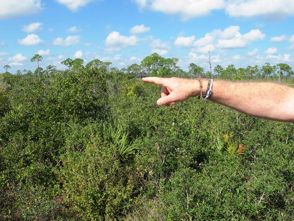 Reed Bowman points out a scrub jay at Archbold Biological Station