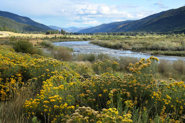 The confluence of the Blackfoot and Clark Fork rivers shines in the afternoon light on Sept. 11, 2019 in Missoula County, Montana. (Chip Somodevilla/Getty Images)