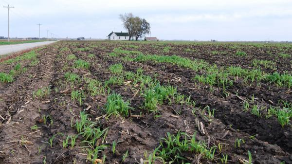 This field is part of a 160-acre tract in Saline County, Mo., that sold for $10,700 per acre in February — double what it would have gone for five years ago.