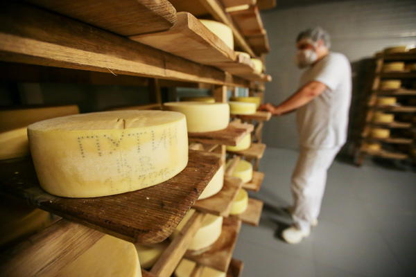 "Oleg Sirota, owner of a cheese factory outside Moscow, buffs the surface of his cheeses with salt brine. The name ""Putin"" appears on a wheel of cheese (left)."