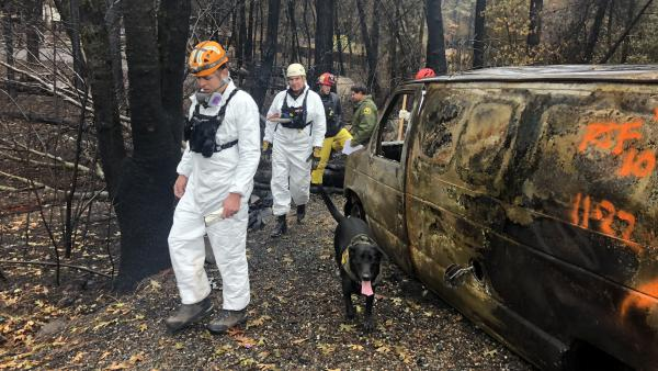 Chuck Williams, second from left, of the Orange County Sheriff's Department and other rescuers search for human remains in Paradise, Calif. with cadaver dog, Cinder.