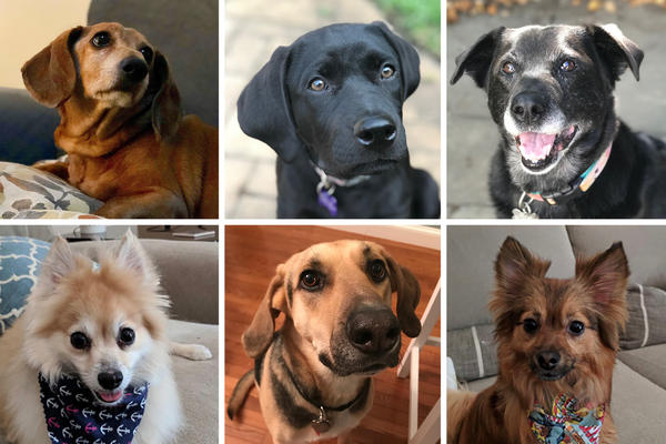 Dogs of NPR family whose names are included in the top 10 dog names of 2018: From left: Daisy, Bear, Bella, Daisy, Max and Charlie.