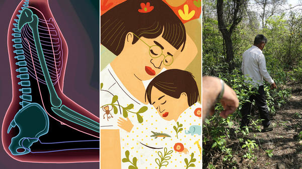 Some images from Goats and Soda's top stories of 2018. From left: changing the way we sit to fix back pain; is sleeping with your baby dangerous?; men walk near the site where the body of an 8-year-old girl, who was raped and murdered, was found.