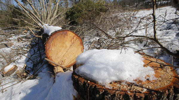 Downed trees mark the route of the Atlantic Coast Pipeline in Deerfield, Va., in February. A federal appeals court has blocked development of portions of the pipeline.