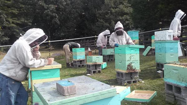Members of the Appalachian Beekeeping Collective inspect one of their apiaries. The collective teaches displaced coal miners in West Virginia how to keep bees as a way to supplement their income.