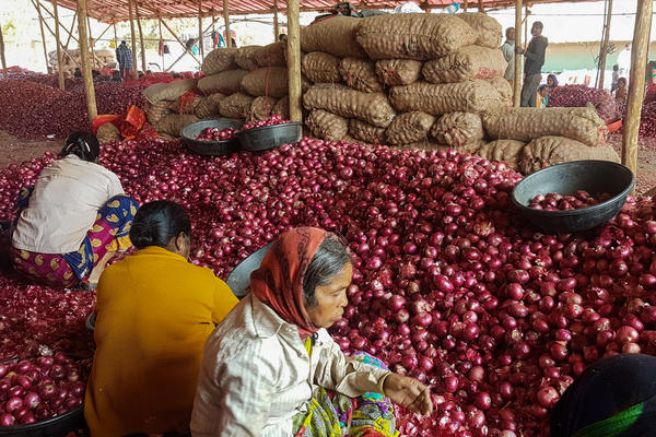Workers sort onions at a wholesale market in Maharashtra. The state is India's biggest onion producer. Prices have fallen drastically because of a surplus and fewer exports.