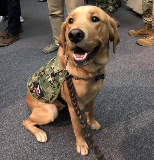 "Service dogs can be trained to provide very different types of support to their human companions, as medical students learn from interacting with ""Shetland,"" a highly skilled retriever-mix."
