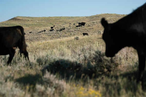 Conni and Craig French own C Lazy J Ranch in northeastern Montana. Conni is concerned about the American Prairie Reserve buying up ranchland to turn it into a wildlife sanctuary.