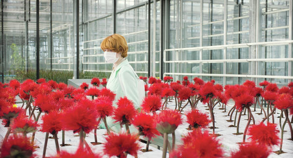 Feed Me, See More: In Jessica Hausner's <em>Little Joe, </em>Alice (Emily Beechum, above) is dedicated horticulturalist and single mother creating a new revolutionary plant species.