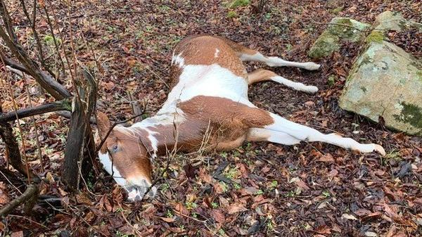 """Fifteen horses were shot and killed in Floyd County, Ky., in what one resident calls """"a very large act of evil."""""""