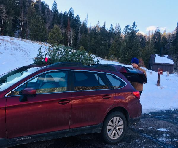 Medicine Bow National Forest is just one of the many spots Mountain Westerners go searching for the perfect Christmas tree.