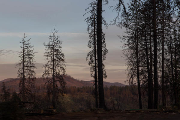 In November 2018, the Camp Fire, which destroyed Paradise, Calif., claimed at least 85 lives and forever changed thousands more.