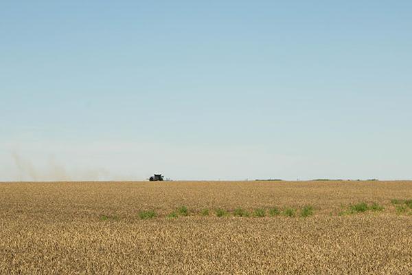 A combine harvesting a wheat field south of Altus, Okla.
