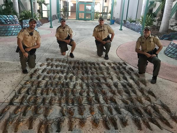 When FWC officers stopped the Perseverance off Marathon in January 2018, they found 165 undersized lobster.