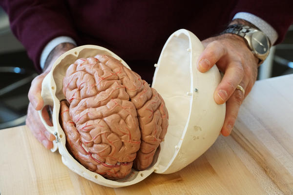 Philip Bayly, a mechanical engineer at Washington University, holds a model of a human brain. Bayly is part of a team of engineers and doctors working to better understand brain injuries.