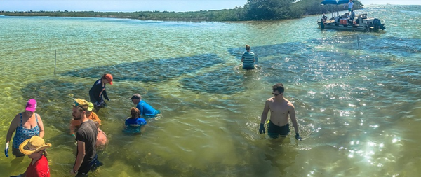 Volunteers build an oyster reef in Hernando Beach, in Hernando County. Courtesy IFAS/University of Florida