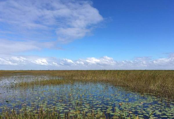 Florida plans to buy 20,000 acres of Everglades wetlands in Broward County to end oil drilling efforts.