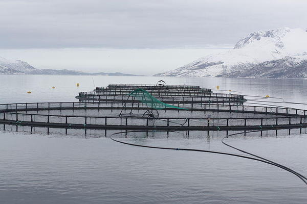 Offshore aquaculture uses fish cages similar to these inshore cages, except they are submerged and moved offshore into deeper water. WIKIMEDIA COMMONS