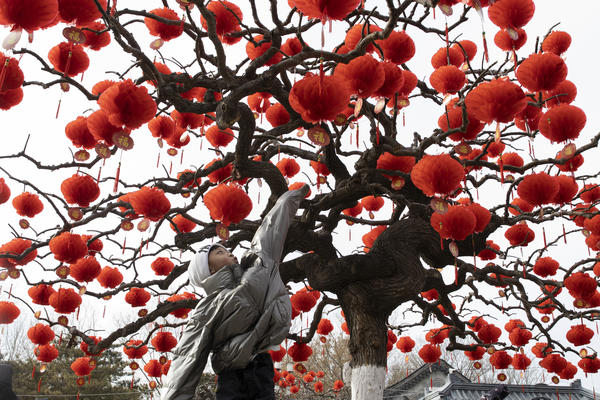 A child jumps to touch lanterns hung on a tree ahead of the Chinese Lunar New Year celebrations on Jan. 25 in Beijing.