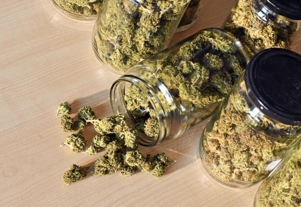 Cannabis in jars.
