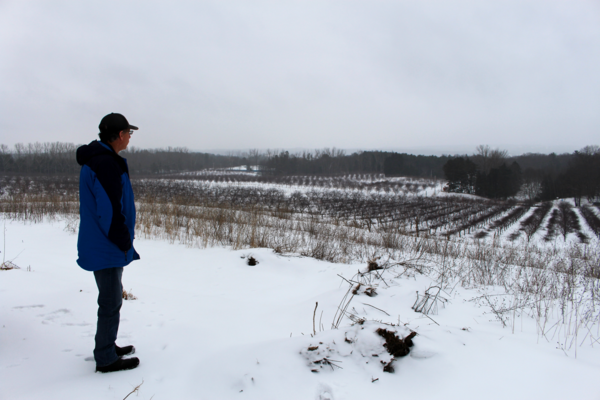 Farmer Dave Meister looks out on his orchard in Onekama.