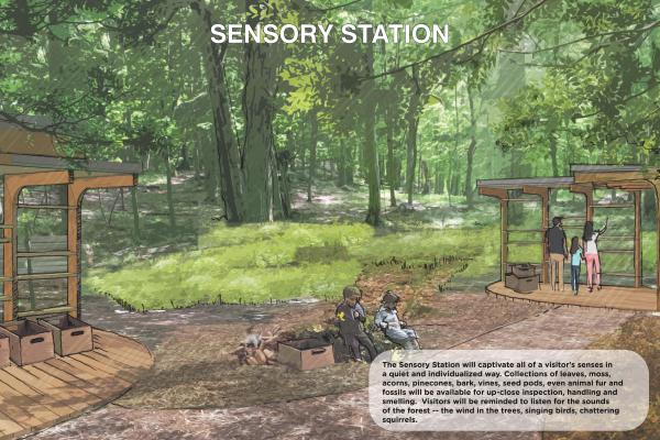 The Sensory Station will captivate all of a visitor's senses in a quiet and individualized way. Collections of leaves, moss, acorns, pinecones, bark, vines, seed pods, even animal fur and fossils will be available for up-close inspection.
