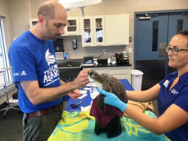Dr. Ari Fustukjian, left, and Rachel Thomas treat Izar