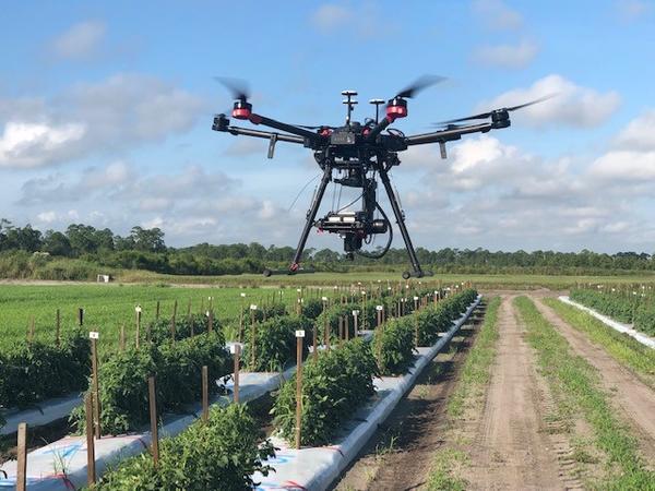 Drone in tomato field.
