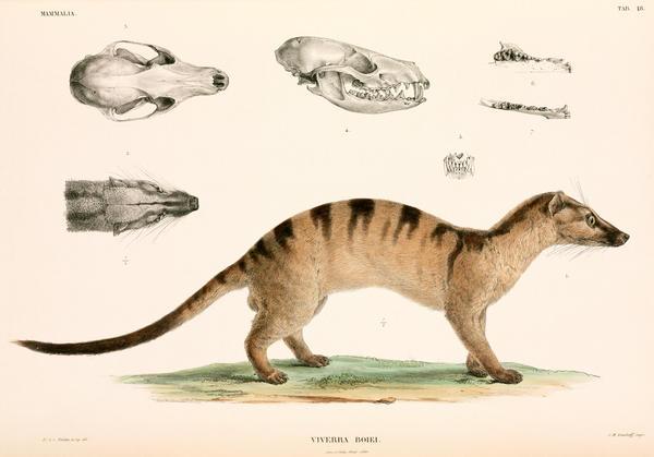 coronaviruses animal origin