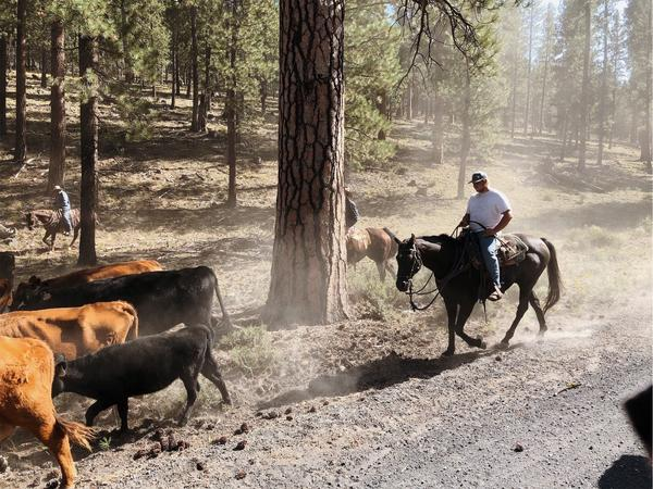 Kaden Wiberg is a ranchhand at the Roth family ranch in central Oregon. He was one of the first people to spot a dead and mutilated cow in September 2019.