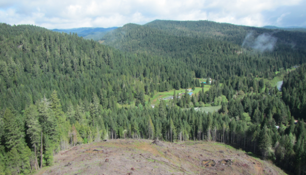 The view from a clearcut on Seneca Jones timber land, the subject of a pesticide spray investigation, with the community of Tiller, Oregon, below.
