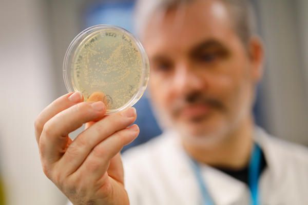 Paul McKay, a molecular immunologist at the Imperial College School of Medicine in London, checks a dish of bacteria containing genetic material from the new coronavirus. He and his team are testing a candidate vaccine.