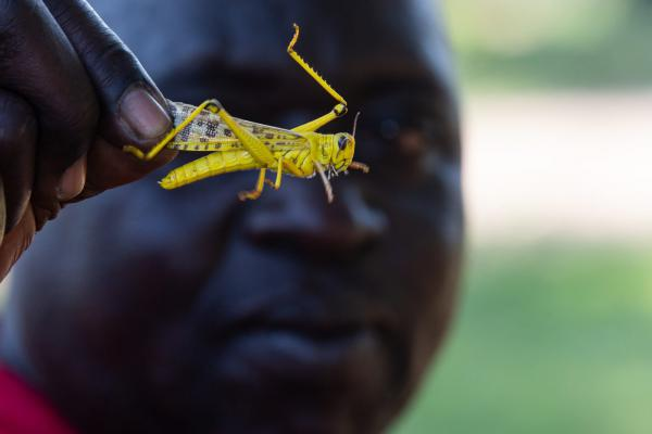 A man in Uganda holds a locust from one of the worst swarms in decades, which has already decimated crops in Kenya and poses a humanitarian crisis in nearby countries like Ethiopia and Somalia.