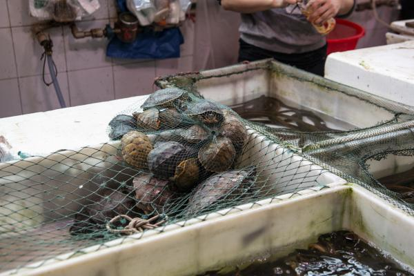Turtles are among the live animals for sale.