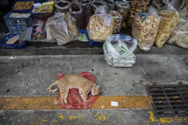 A cat naps in front of a store next to the wet market.