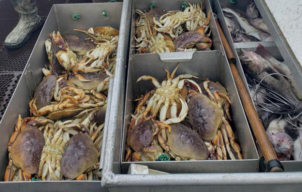 <p>The Dungeness crab fishery generates about $170 million a year in revenue for the West Coast commercial fishing fleet.</p>